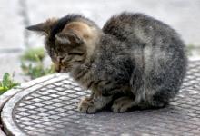 R pulsif pour chat pour loigner les chats funny club - Repulsif pour chats dans les jardins ...