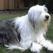repulsif chien, répulsif naturel pour chien,
