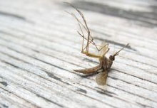 anti moustique