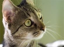 choisir un chat, acheter un chat,