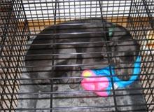 cage transport chien, transporter un chien,