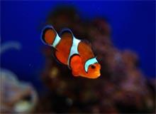 choisir poisson aquarium, choix poissons,