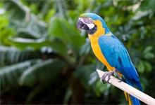 oiseau de compagnie, choisir un oiseau,