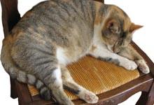 enlever odeur urine chat, truc odeur chat,