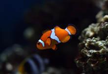 nettoyer de l'aquarium, nettoyer une aquarium, poissons aquarium,