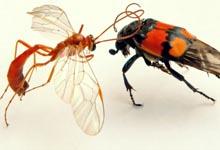 se protéger des moustiques, anti moustique,