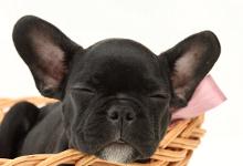 prenom pour chien, idées prénoms chien, nom de chien,