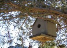 plan cabane oiseau