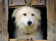 construire niche pour chien, plan de niche,