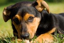 devenir éleveur de chien, élevage canin,