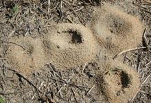 détruire une fourmilière, tuer les fourmis,